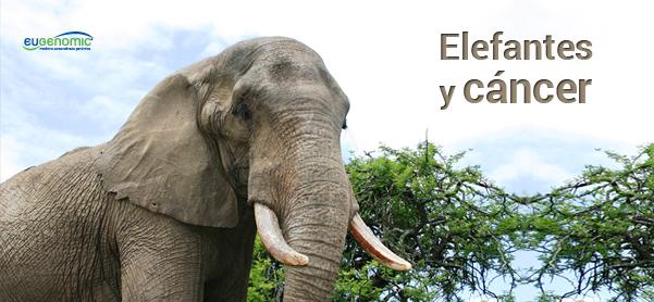 Elefantes y cáncer