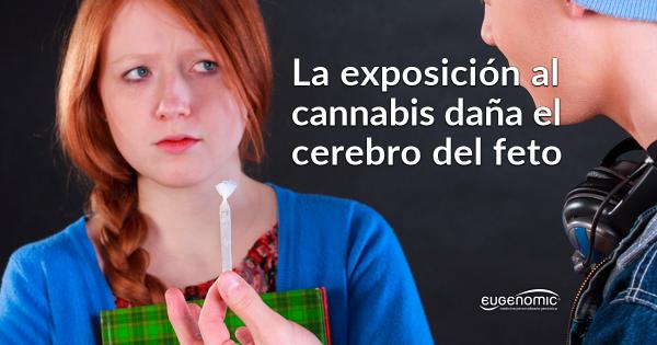 La exposición al Cannabis daña el cerebro del feto